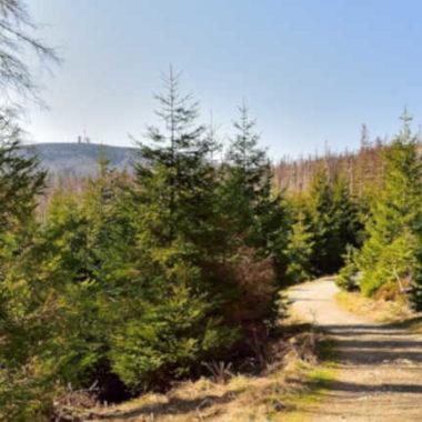 Coronavirus: Einreisebeschränkungen in den Harz